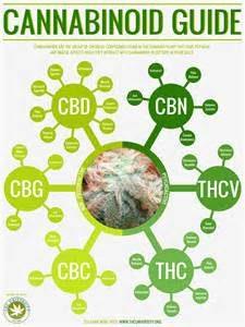 cannabinoids, cannabis