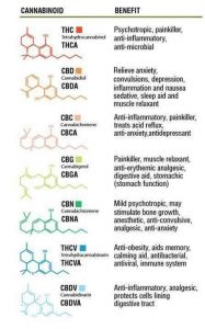 medical cannabis, cannabinoids