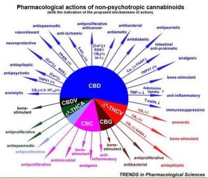 medical cannabis, cannabinoid acid, cannabinoid-acid